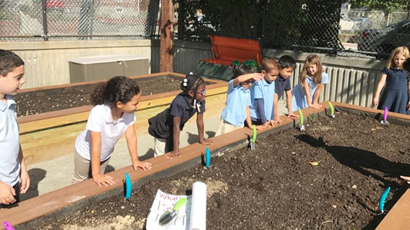 WHCIS students gardening